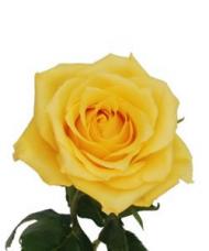 1 Trandafir Galben